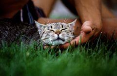 Ein schönes Katzenleben
