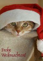 Ein schönes Weihnachtsfest!
