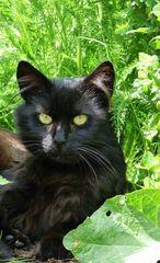 Ein schönes Wochenende wünscht Fidel ,die ganze Katzenbande und auch ich!
