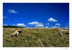 - ein schwarzes Schaf -
