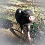 Ein Schweinchen namens Oscar