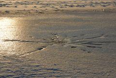 ... ein Seestern ...