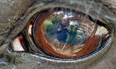 Ein Selfie im Pferdeauge! - Un selfie dans l'oeil d'un cheval!