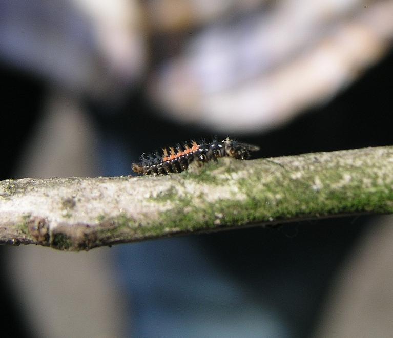 Ein seltsamer Käfer