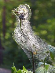 Ein seltsamer Vogel ...