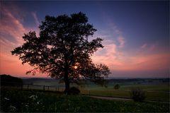 Ein simpler Baum