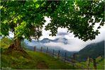 Ein Sommer (Morgen) in den Bergen 19