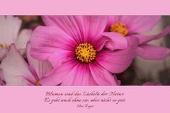 Ein Sommerblumenkärtchen....