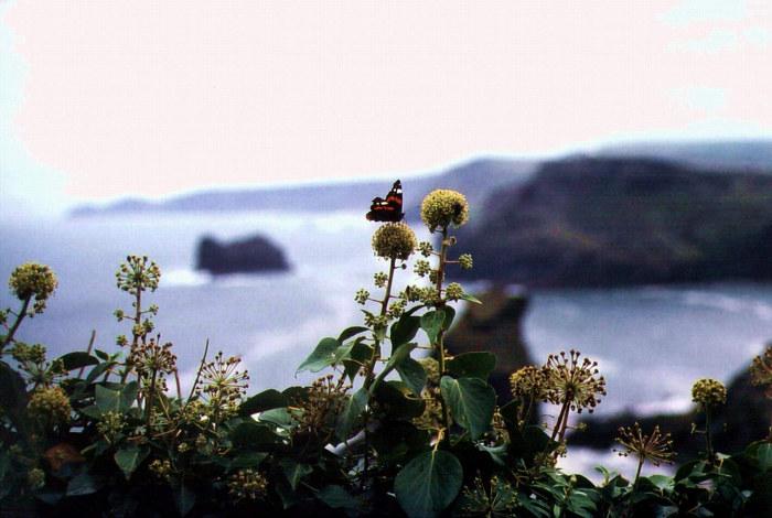 Ein Sommertag an Cornwalls Küsten