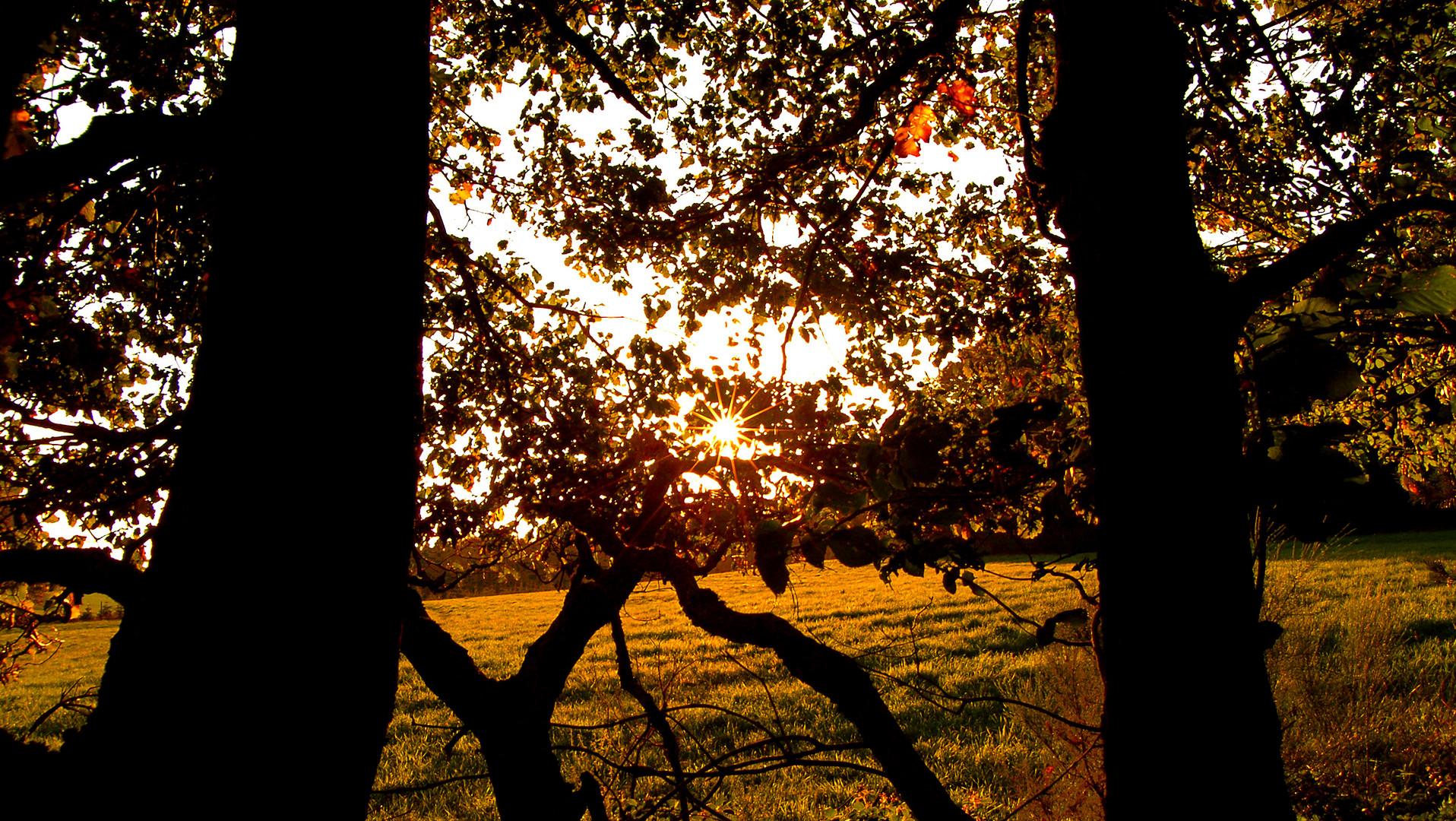 Ein Sonnendiamant, im Wald!