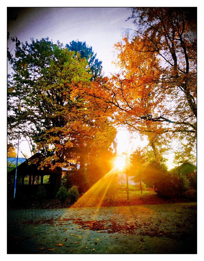 Ein Sonnenstrahl am Morgen