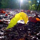 ein Sonnenstrahl im Herbst