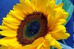 Ein sonniger Blumengruß aus Schwelm