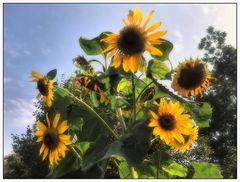 Ein sonniger Blumengruß