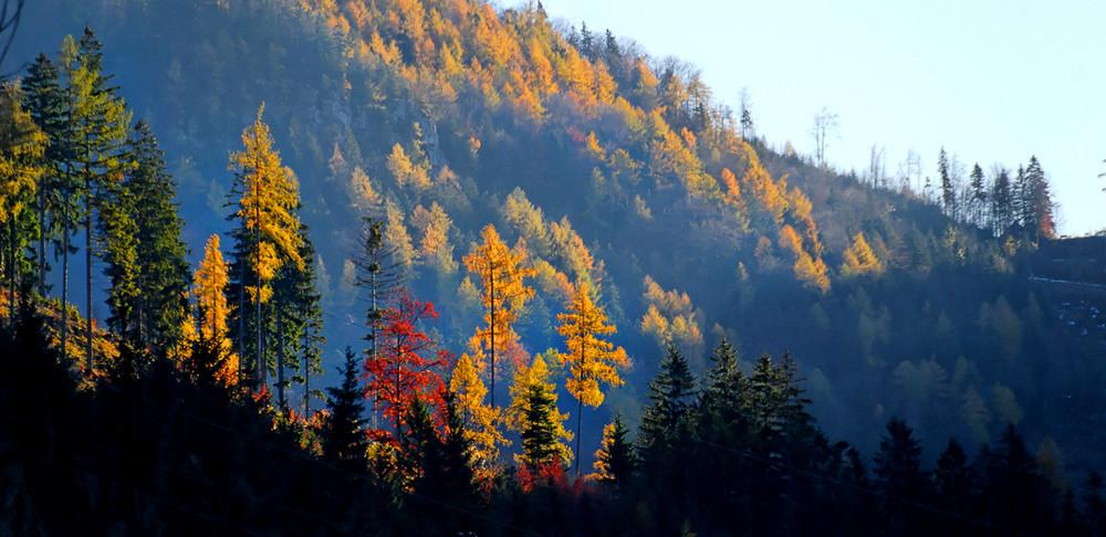 Ein sonniger Herbsttag im Ötscherland