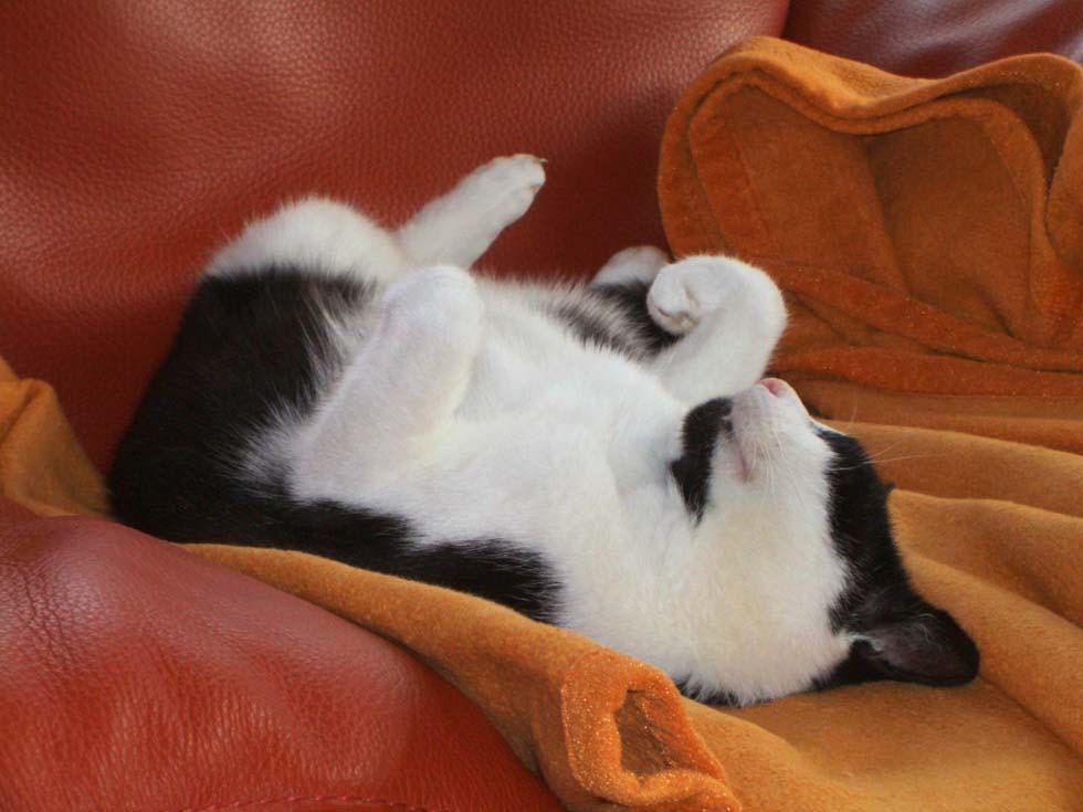 ein sonntag im bett foto bild tiere haustiere katzen bilder auf fotocommunity. Black Bedroom Furniture Sets. Home Design Ideas