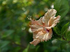 Ein spätes Mittwochsblümchen