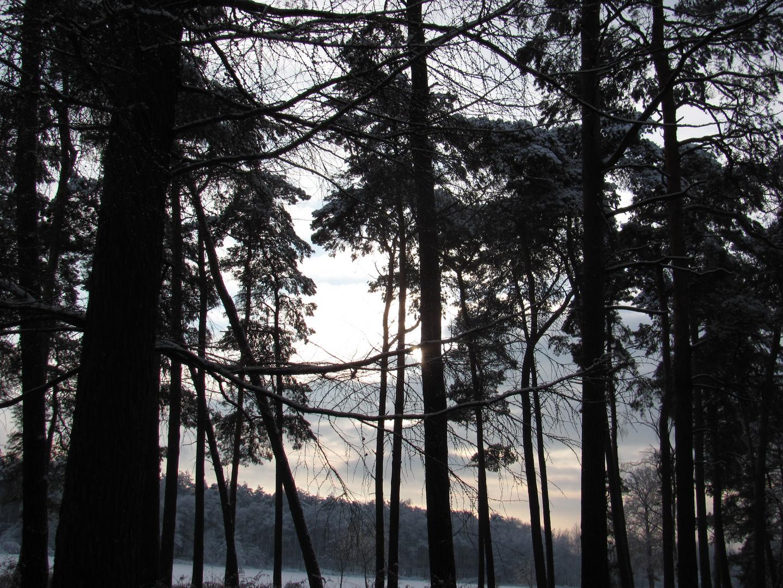 Ein Spaziergang im Wald