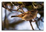 Ein Sperling im schönen Licht