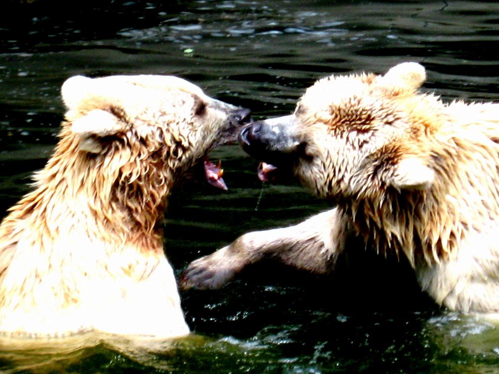 Ein Spiel unter Bärenfreunden