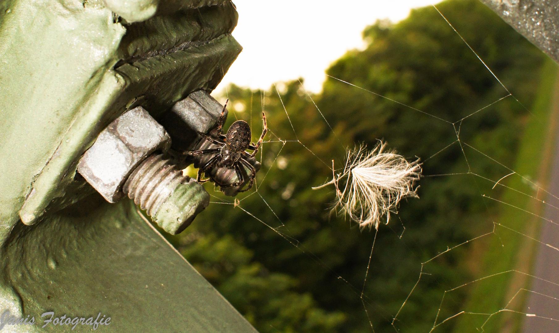 Ein Spinne zu sehen ist nicht das Problem. Es wird erst zu einem Problem, wenn sie plötzlich weg ist
