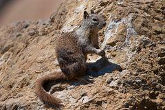 """Ein  """"Squirrel """" aus den USA"""