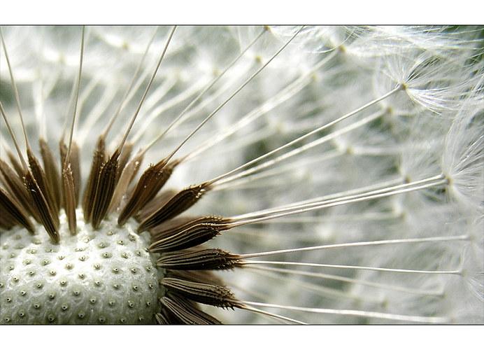 Ein Statement für eine eigene Pusteblumen-Sektion :-)