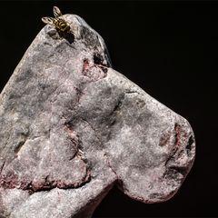 Ein Stein hat die Ruhe weg