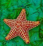 ...Ein Stern...
