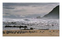 Ein Strand allein für mich (und die Vögel)