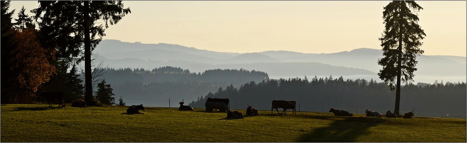 ein Stück Schwarzwald .......