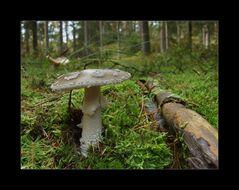 Ein Stück Wald