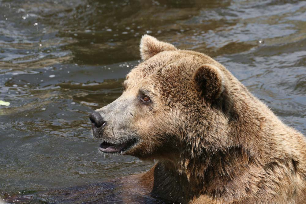 Ein süßer Teddy...