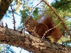 Ein süßes Hörnchen..