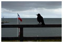 Ein Tag auf Helgoland - 5