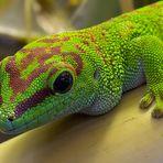 ein Taggecko