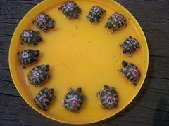 Ein Teller voller Schildkröten
