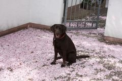 Ein Teppich aus Blüten für Alice