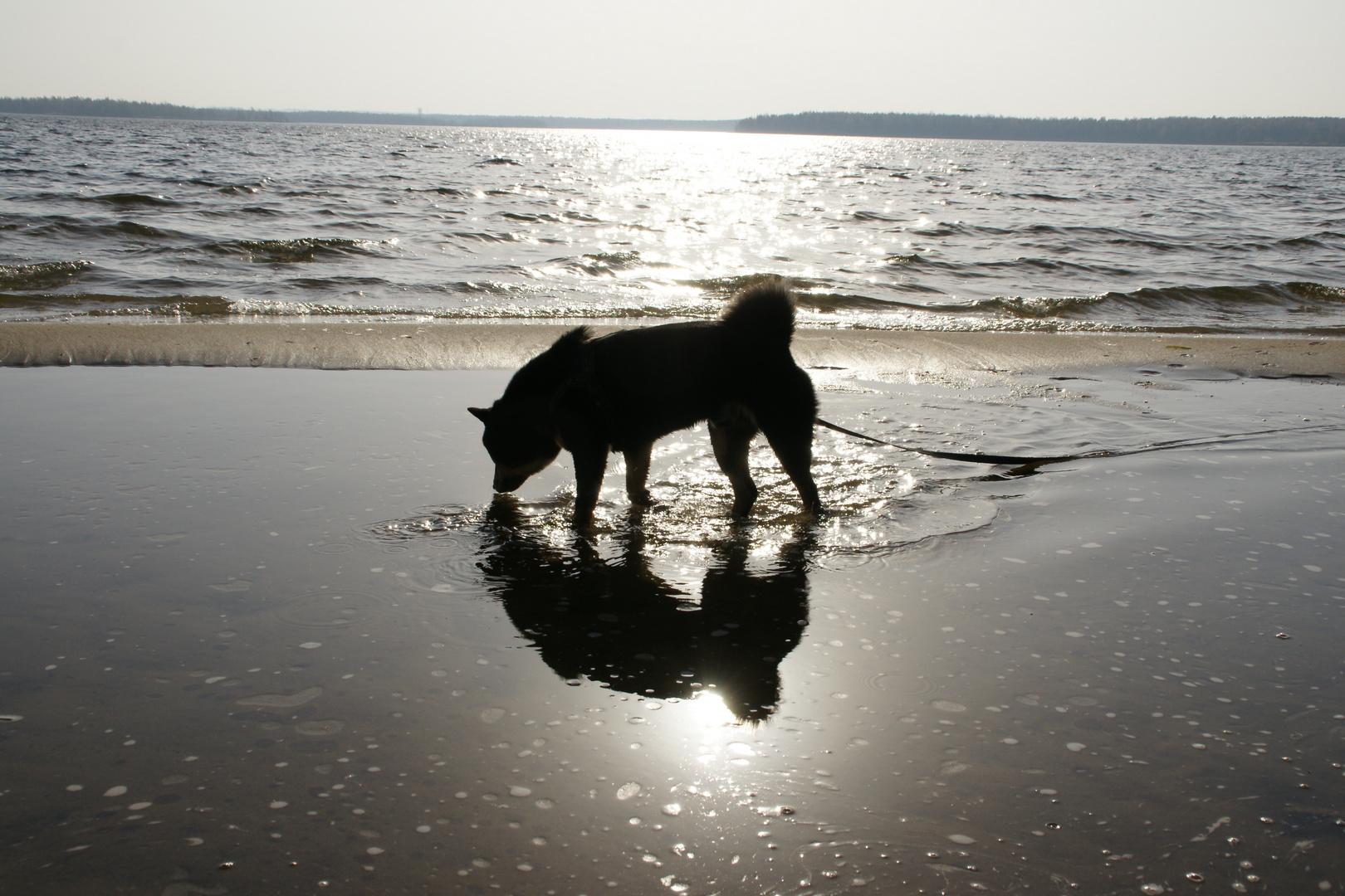- Ein tierisch guter Spaziergang -