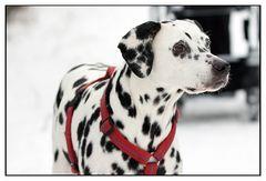Ein toller Hund wird 10 Jahre - Grande Dame Gina