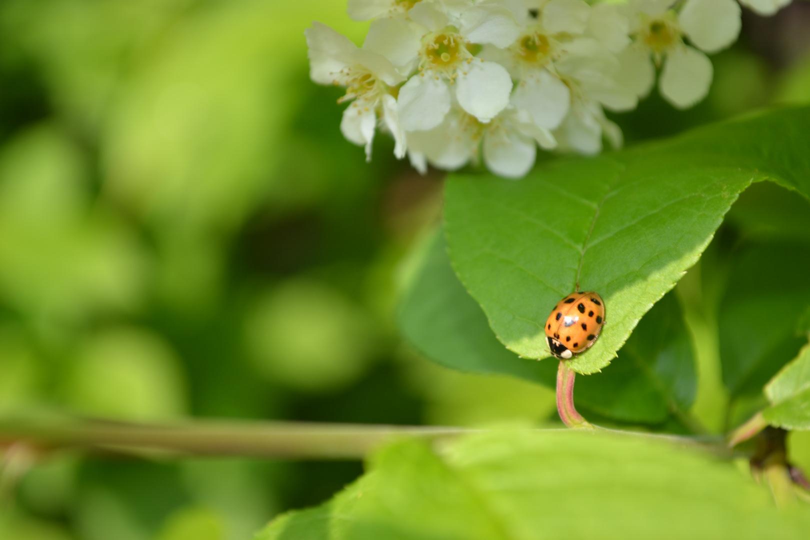 ein toller Käfer