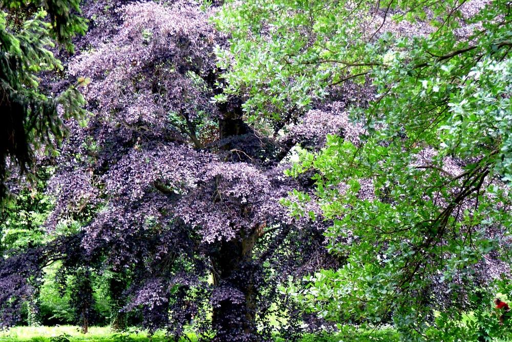 ein toller Kontrast von Grün und Violett