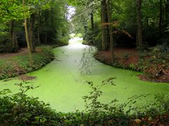 Ein Traum in Grün...Pea soup pond