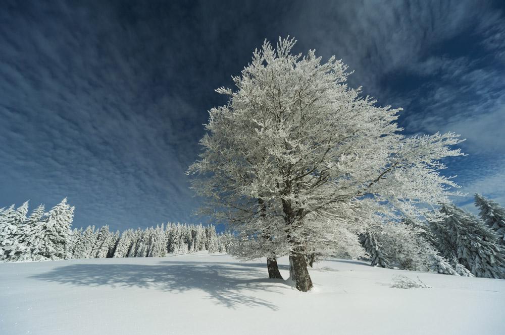 Ein Traum in weiß- Der Schwarzwald