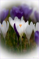 Ein Traum vom Frühling..
