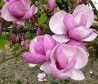 Ein Traum von Blüten ....