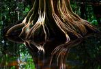 Ein Traum von einem Baum ...