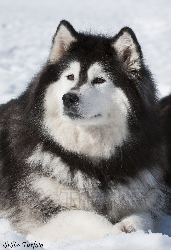Ein Traum von einem Hund