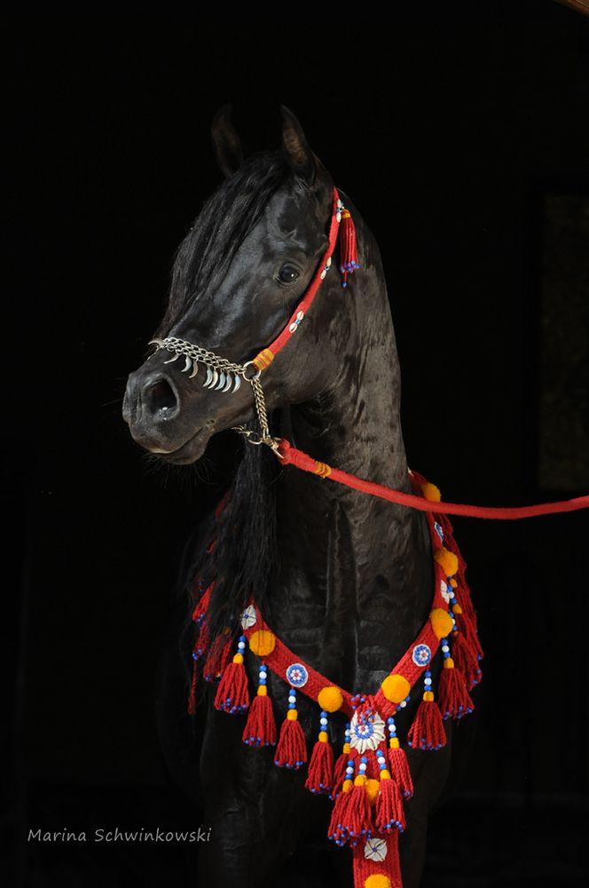 Ein Traum von einem Pferd