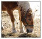 Ein Traum von Pferd!